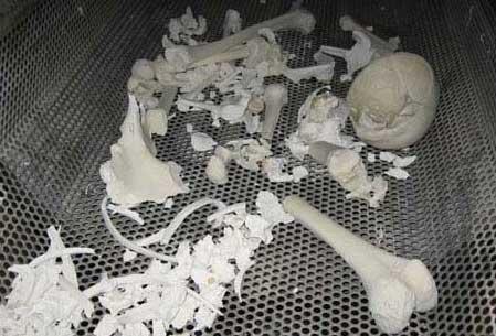 Cremaciones verdes