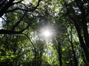 celebrar muerte ecofunerales