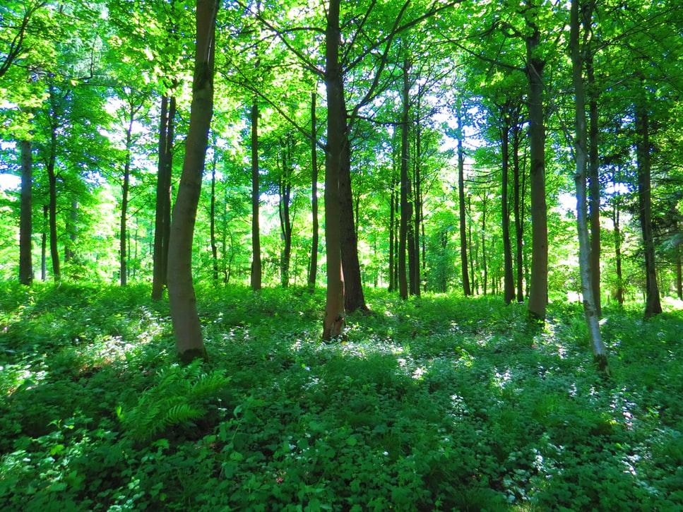 bosque-árboles