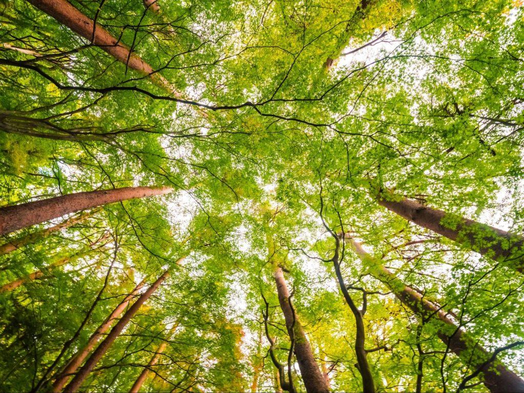 bosques del recuerdo