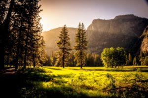 ¿Qué impacto tienen las cenizas en la naturaleza?